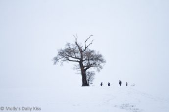 Tree standing in field of snow with silhouettes of people uderneath it