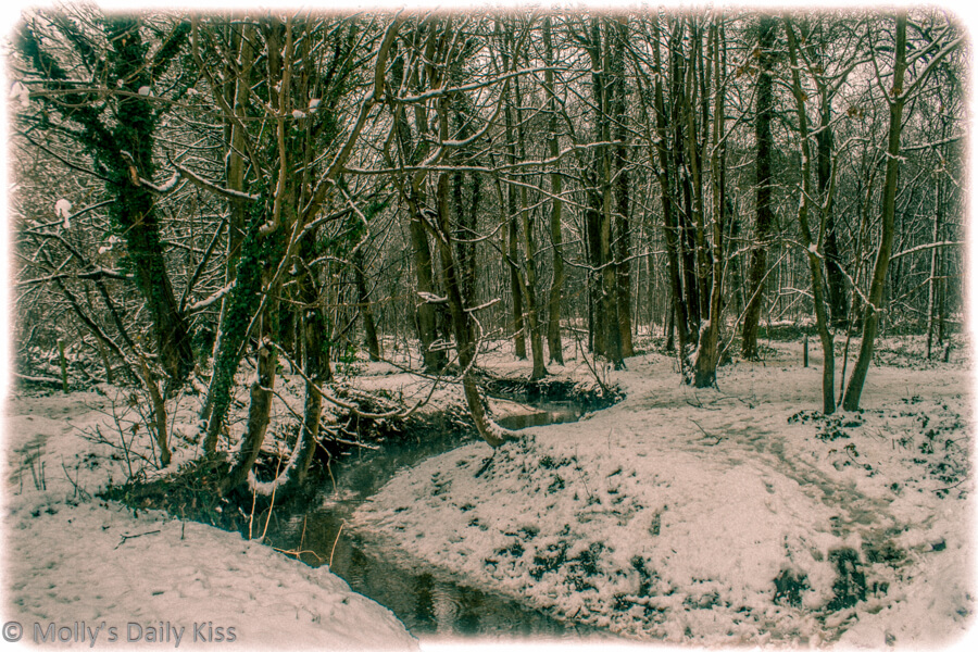 Stremlet winding through snowy woodland