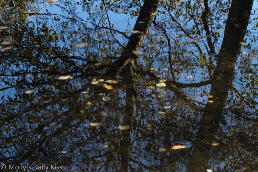Tree reflected in stream with the water riples making it look like it trembles