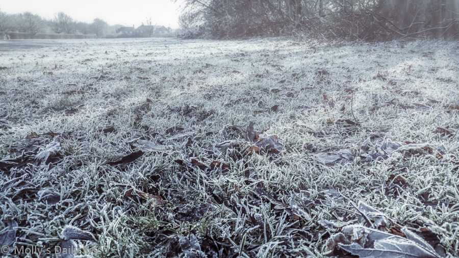 cold frost and fod on grass in early morning light