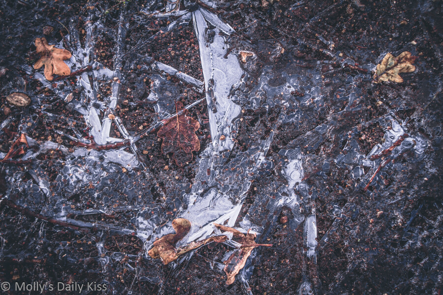 ice on the ground containing autumn leaves