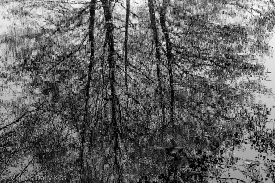 winter trees reflected in stream