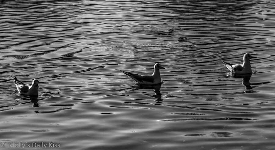 three gulls sitting in a row on the water in black and white