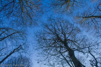 Looks up through bare branch tree to the blue spring sky that is daily bread for the eyes