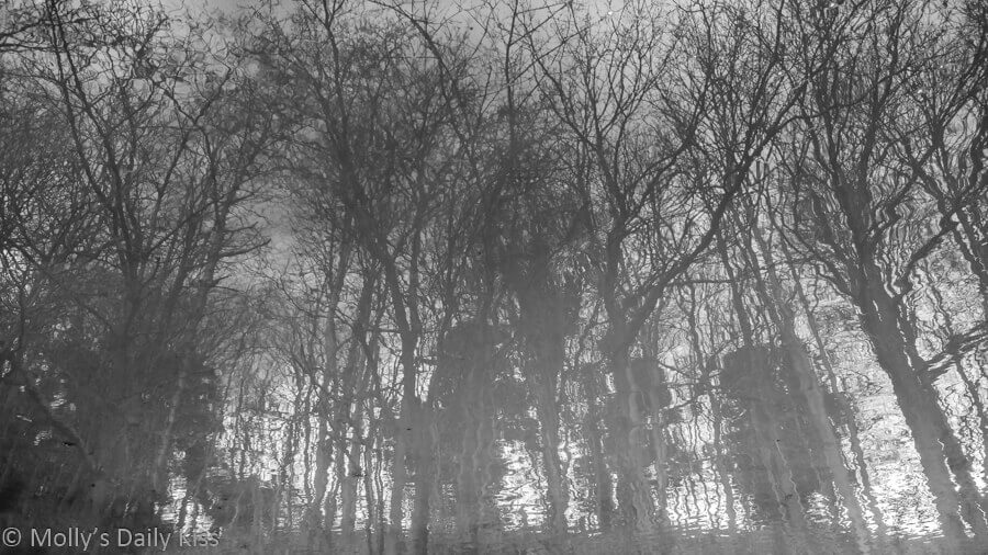 black and white of winter trees reflected in puddle