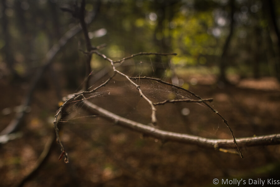 spider web in the trees in the woods