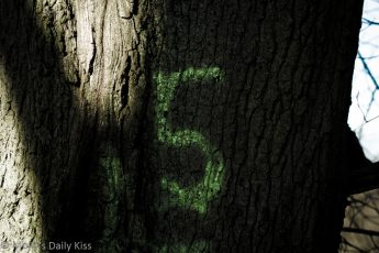 The number 5 sprayed on a tree truck is a mystrey why it is there