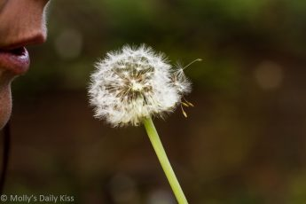 Womans mouth blowing on dandilion clock making wishes
