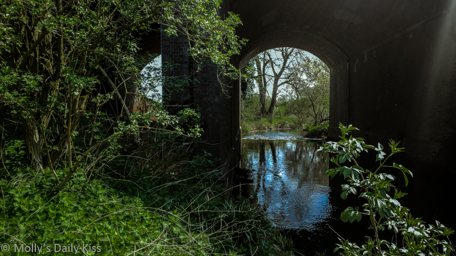 looking through tunnel with trees reflected in the water for post called life on earth