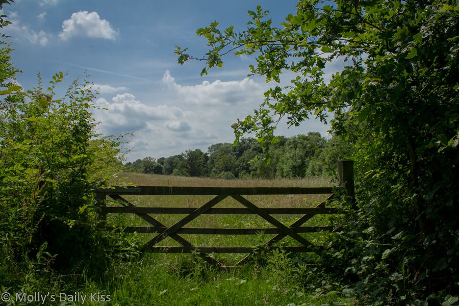 gate in field surrounded by summertime june green foliage