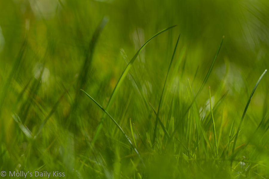 blade of grass in sea of grass that is ut of focus