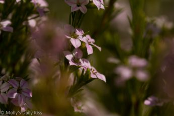 small pink flowers should be seen along the way