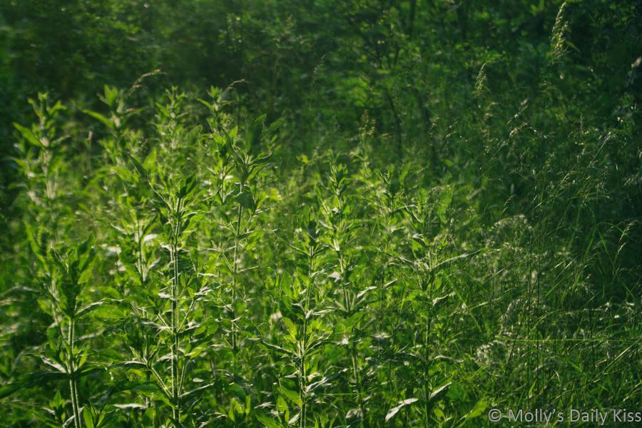 double exposure of green overgrowth