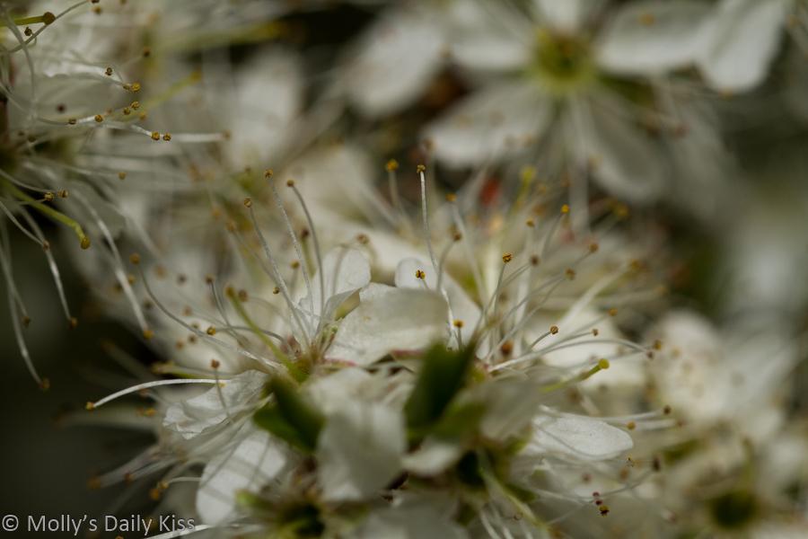 White blossom bokeh looks like fragments of flowers
