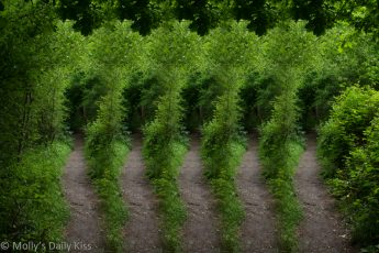 abstract of woodland path to show 5 different paths