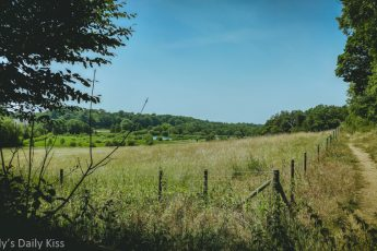 view over fields from peaceful corner of panshanger country park