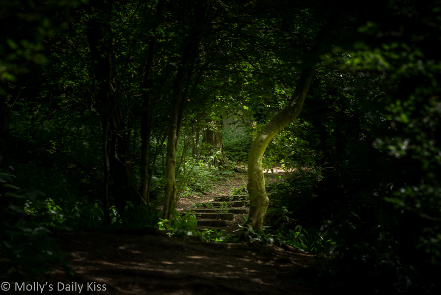 steps through woodland path