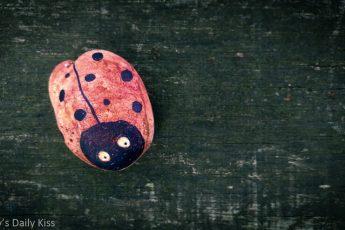 Ladybird rock on a bench