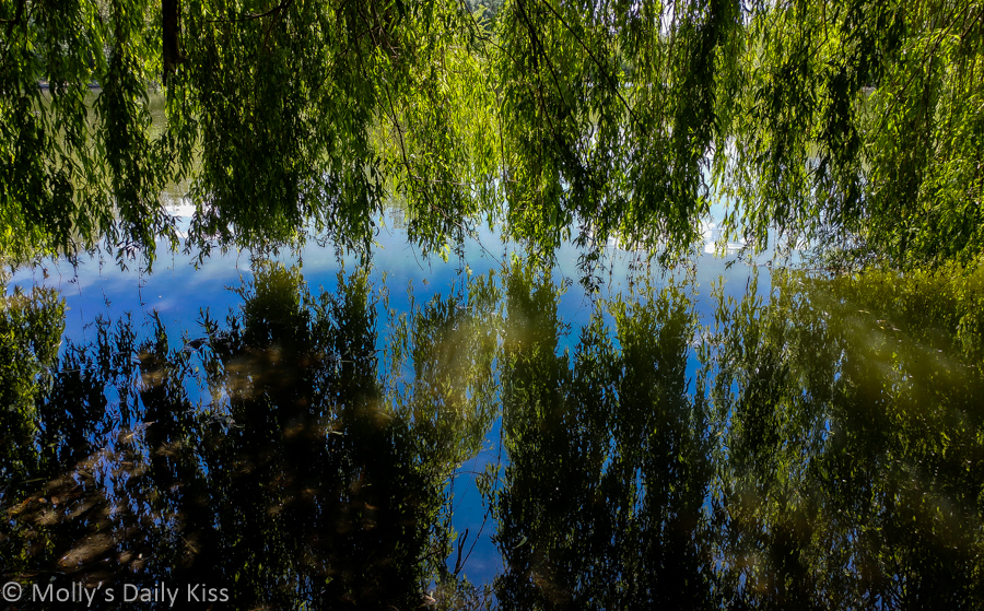 weeping willow reflected in water