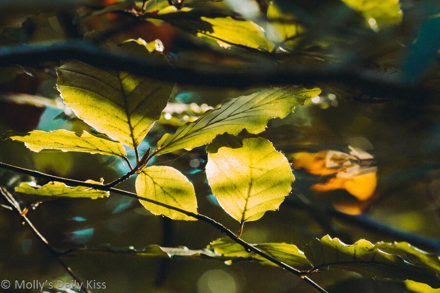 glorious autumn leaves on trees