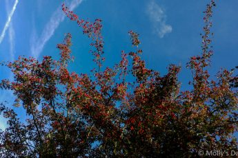 red berries on bush against bright blue sky