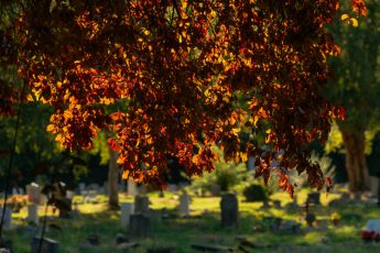 autumn red leaves in Southampton cemetary