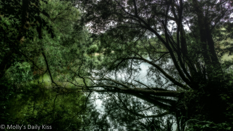 Summer trees reflected in pond with editing effect that makes it look soft