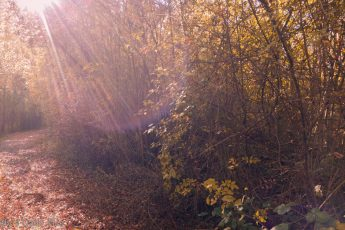 sunburst through ripened autumn leaves and path