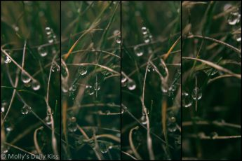 droplets of water rain fall clinging to grass