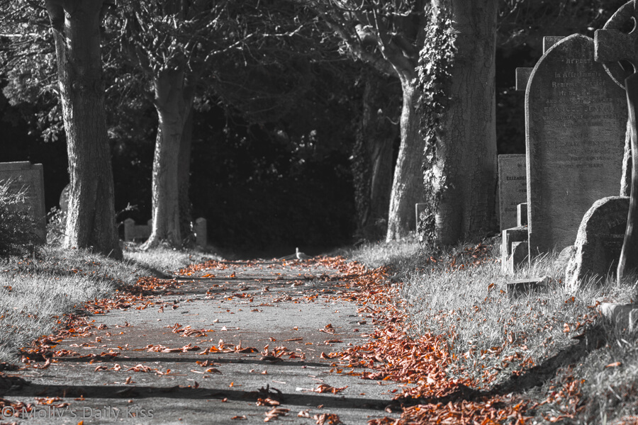 Autumn leaves on the footpath in a graveyard. Death is inevitable