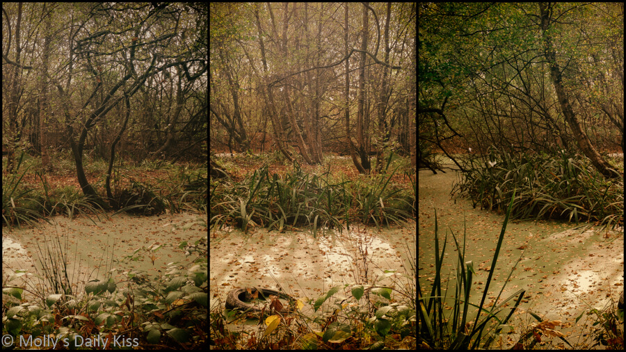 Triptych of autumn pond thet is beauty beautiful