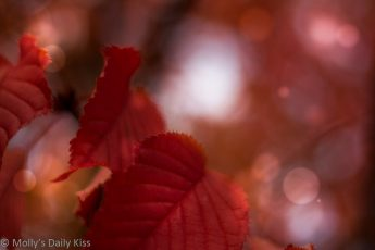 Flame red autumn leaves with boken light spots