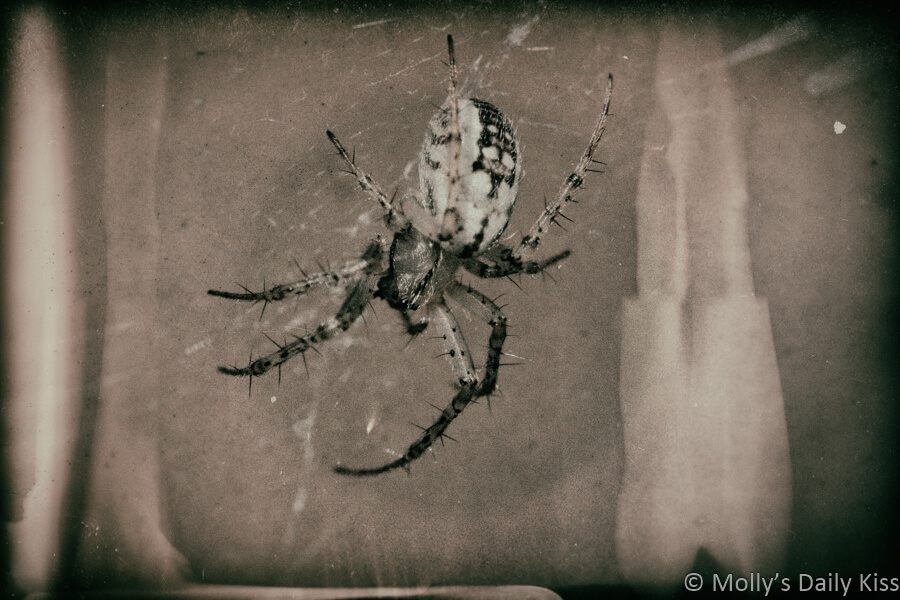 wet plate edit of a spider in her web
