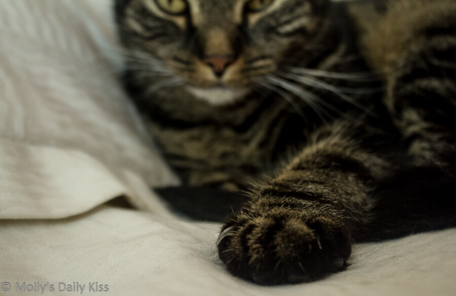 Cloe up of cats paw with her body and aface out of focus in the background