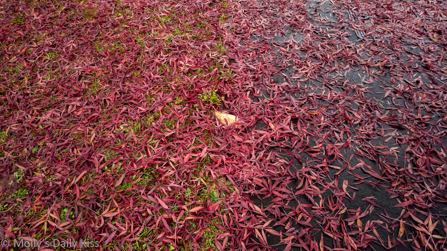 red leaves on different colors ground