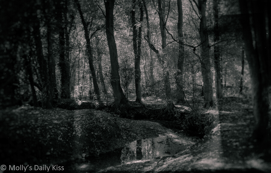 wetplate of woodland with stream running through it