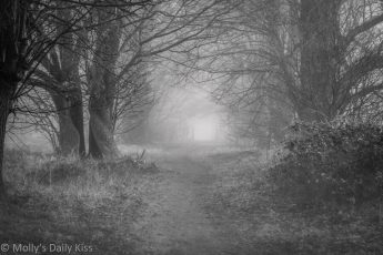 black and white of frost covered path through trees
