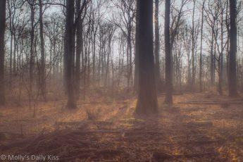 Golden winter sunshine in woodlands