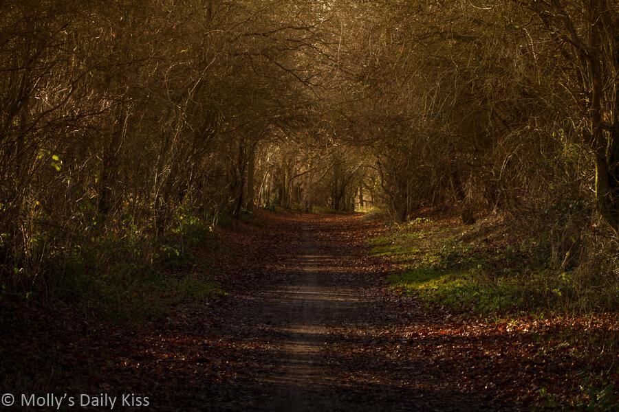 path through winter trees