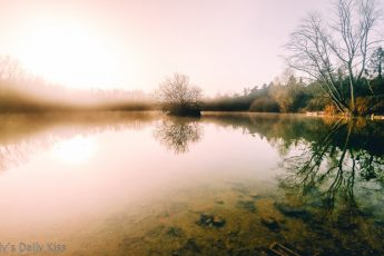 morning mist on pond with winter trees