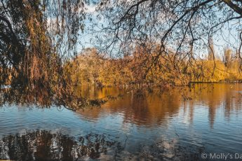 trees reflected in the lake at Stanborough