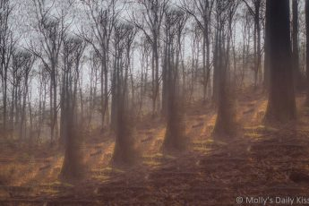 Abstract layered image of grand winter woodland