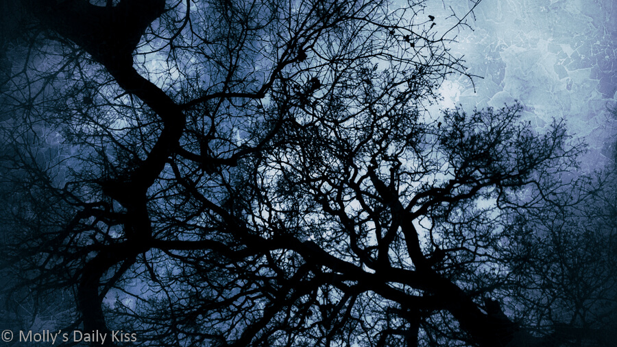 looking up through black contorted branches of trees to dark textures sky