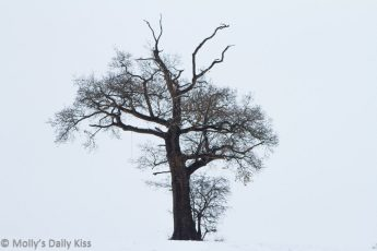single tree in field surrounded by white quilt of snow
