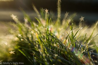 star shaped bokeh on frosted dew covered grass with rainbow sunburt
