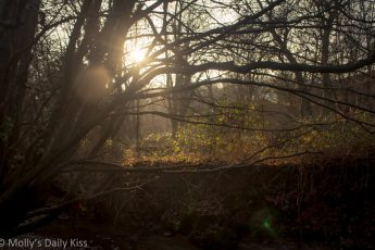 Winter sunlight burting through branches of trees in the woods