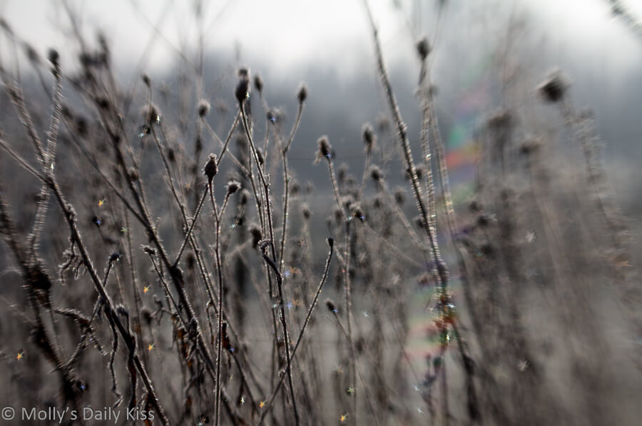 Wan february fosted stalks with star shaped rainbow bokeh