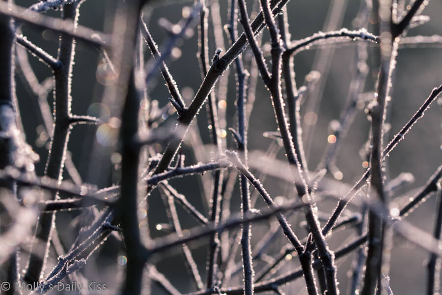Bokeh sunlight through frosted branches