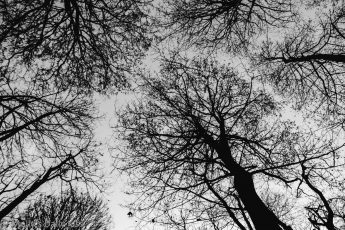 looking up through winter trees