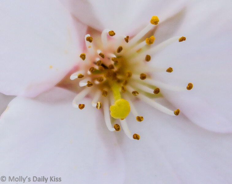 Macro of white tree blossom